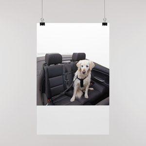 Hondenbenodigdheden